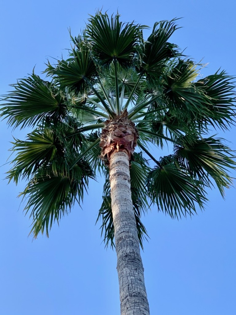 This image has an empty alt attribute; its file name is palm.jpg